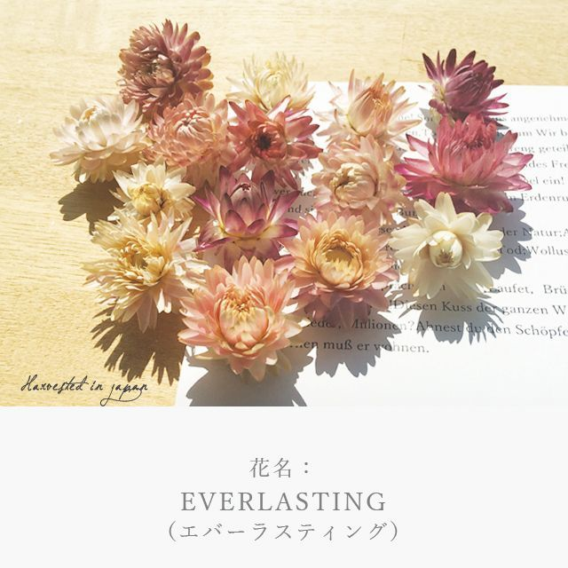 画像9: MAXMATERIA 花束バスタオル  (9)